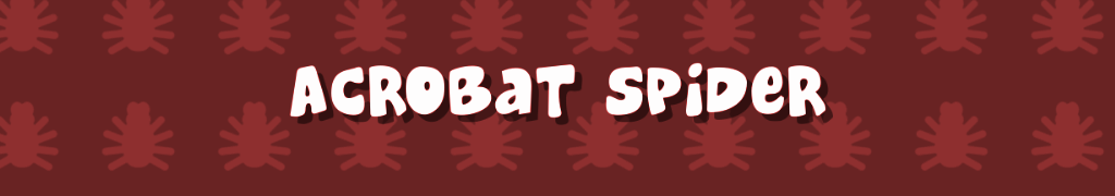 Acrobat Spider