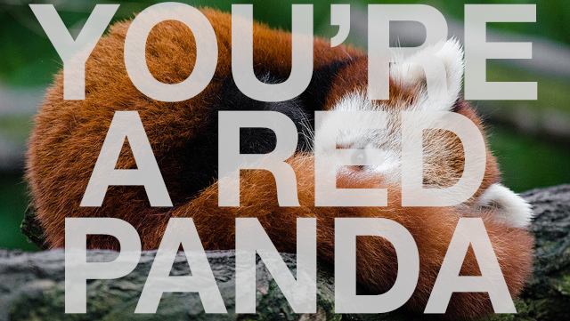 You're a Red Panda!